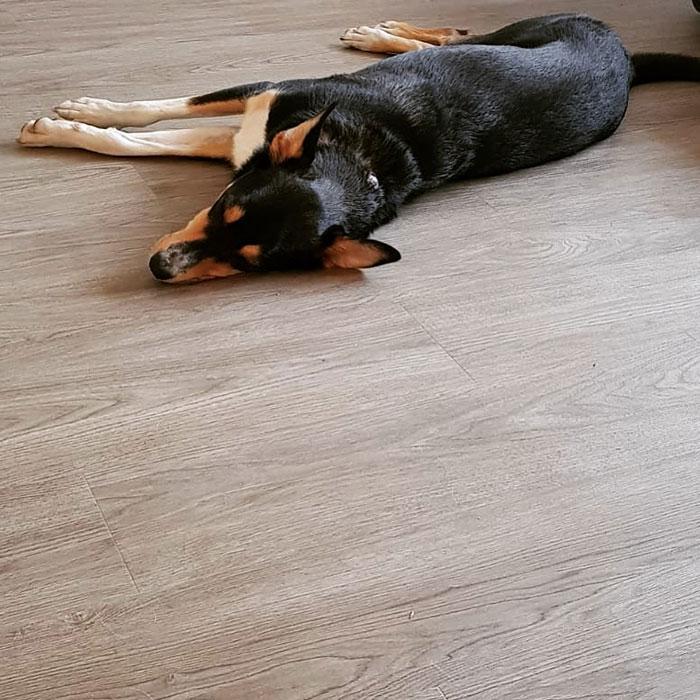 Our Floors Floors For Paws