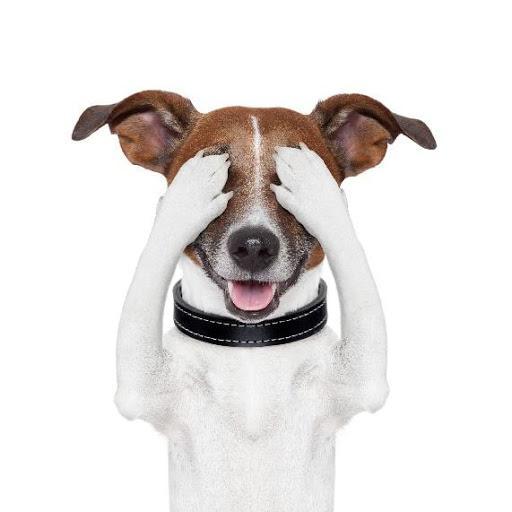 Does Dog Damage Laminate Flooring, Will Dog Urine Damage Laminate Flooring